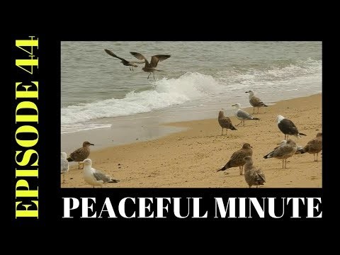 Peaceful Minute ~ Episode 44 ~ Shore Birds ~ Scussett Beach ~ Cape Cod