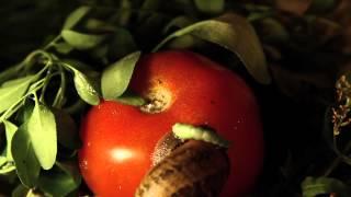 Latinoamérica verde - Capítulo 1: Insectos // www.orugo.cl Thumbnail