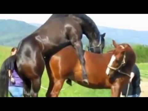 funny animal make love | love clips | funny compilation 2014 |video funny love thumbnail