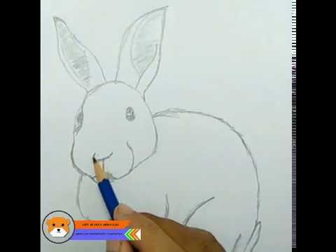 Learn How To Draw Rabbit Sketches Ii Belajar Cara Menggambar Sketsa