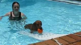 Training Your Dog To Use Skamper Ramp