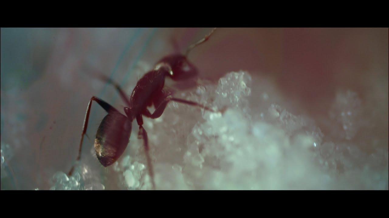 Simon Daniel - Microscope (Clip officiel)