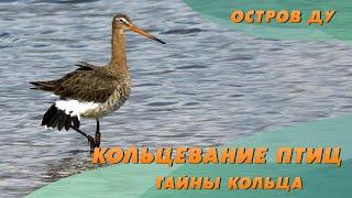 Зачем кольцевать птиц? Один день Туровской станции кольцевания | Остров Ду – Живая природа Беларуси