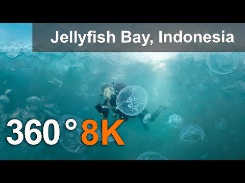 360 Video, Jellyfish Bay, Raja Ampat, Indonesia, 8K Underwater Video