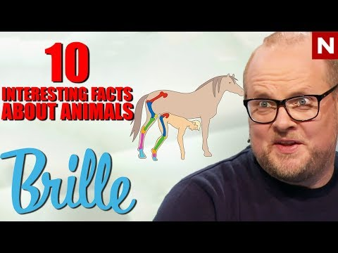 Brille | 'The horse's knees are up in the crotch?!' | TVNorge