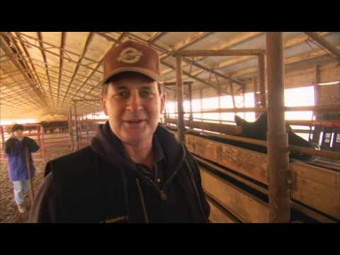 VetsOnCall - Farmers raise cattle humanely for beef Part I