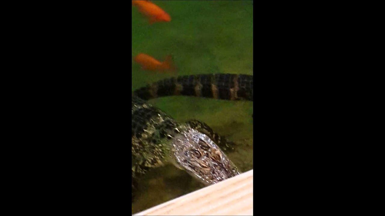 Golf N Gator Putt Course Cocoa Beach Fl