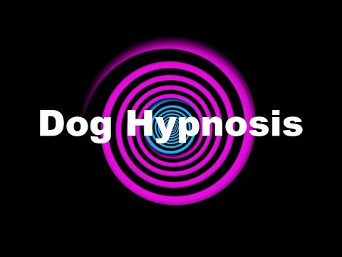 dog-hypnosis-(requested)