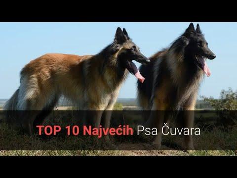 Psi Čuvari - Top 10 Najvećih Psa Čuvara Na Svijetu 🐕