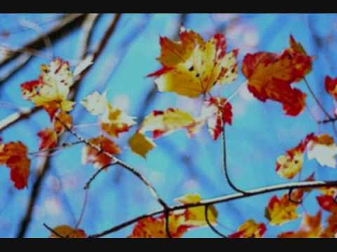 Ron Pope - Fireflies [With lyrics]