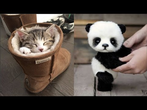 Cute baby animals Videos Compilation cute moment of the animals – Cutest Animals #4