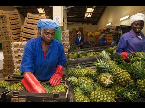 Making Agriculture the Engine of Growth and Job Creation in Ghana | 2018