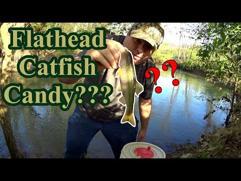 Fishing For Creek Chubs!  Are They Flathead Catfish Candy?