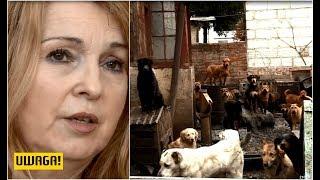 Dzika hodowla pani doktor. Psy żywiły się padliną (UWAGA! TVN)