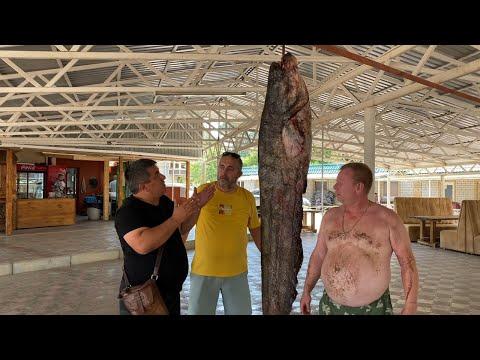 СОМ 103 КГ🐟 СОЧНЫЙ ШАШЛЫК,СТЕЙК И ФИЛЕ В ПИВНОМ КЛЯРЕ ИЗ РЫБЫ! шашлык ссср кляр на пиве для рыбы