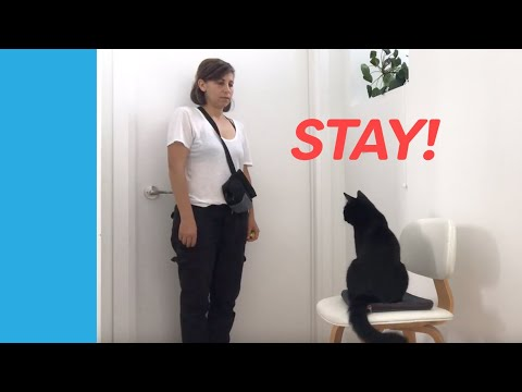 Cat Training: Teach Your Cat To Stay