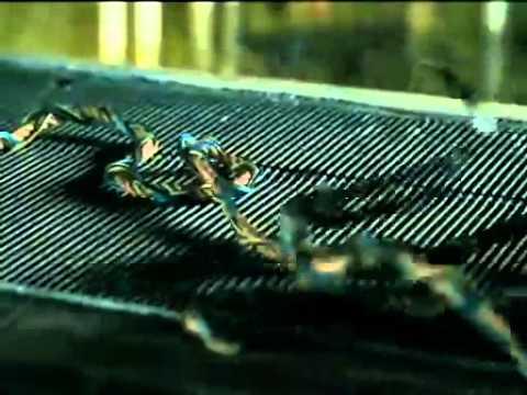 โคตรฉลาม 2