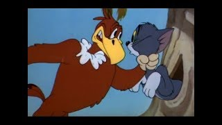 Tom And Jerry English Episodes - Flirty Birdy - Cartoons For Kids | Key Mawe