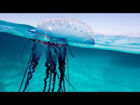 20 Amazing Facts About Jellyfish | You Probably Don't Know