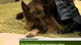 Интервью.Как защититься от бродячих собак(Собаки продолжают атаковать людей по всей России. Подобные трагедии случаются по несколько раз в месяц...., 2011-08-18T02:09:11.000Z)