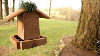 The Greatest Bird Feeder Ever Built