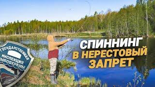 Почему ловить спиннингом в нерестовый запрет МОЖНО?