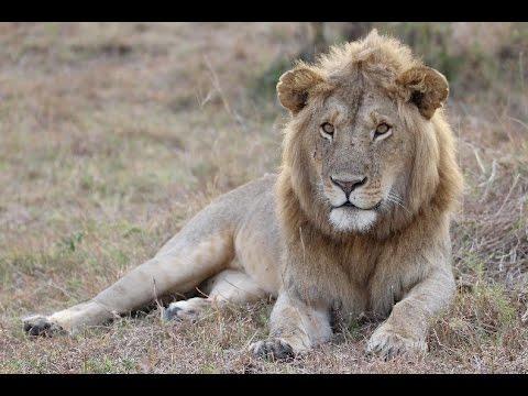 Safari @ Kenya (Tsavo, Taita Hills, Masai Mara / December 2016)