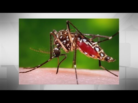 Canadian mosquito tests for Zika virus