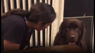 Clever dog asks owner for hug, ends up stealing her food