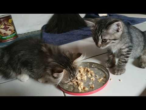 mengobati-kucing-mencret-secara-alami-|-beri-ini-untuk-menyembuhkannya