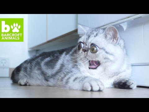 Herman The Scaredy Cat Can't Believe His Eyes