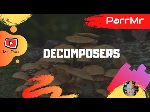 Decomposers Song