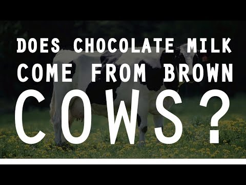 Does Chocolate Milk Come from Brown Cows? | Wait. What?