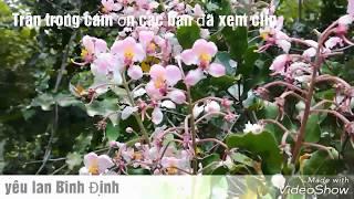 [Ký Sự Tầm Lan] Lan Rừng Có Rất Nhiều Loài Và Rất đặc Sắc Phong Phú Và đa Dạng