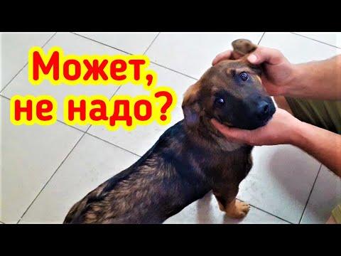 НаХрена собаке ID чип?! Больно чипировать собаку? Регистрируем щенков в международной базе данных.