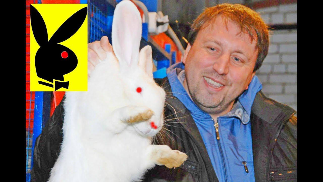 Главная соль изобретения михайлова — особая конструкция агрегата для содержания кроликов (клеткой это устройство назвать язык не поворачивается, да и сам михайлов говорит, что «клетка оскорбительна для кролика»). Он представляет собой трехъярусное сооружение со стеллажами, построенное.