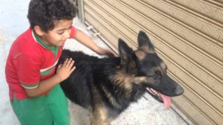 Dog Play With Small Boy Owner  funny Cute Dog Play With A Boy funny Dog Videos