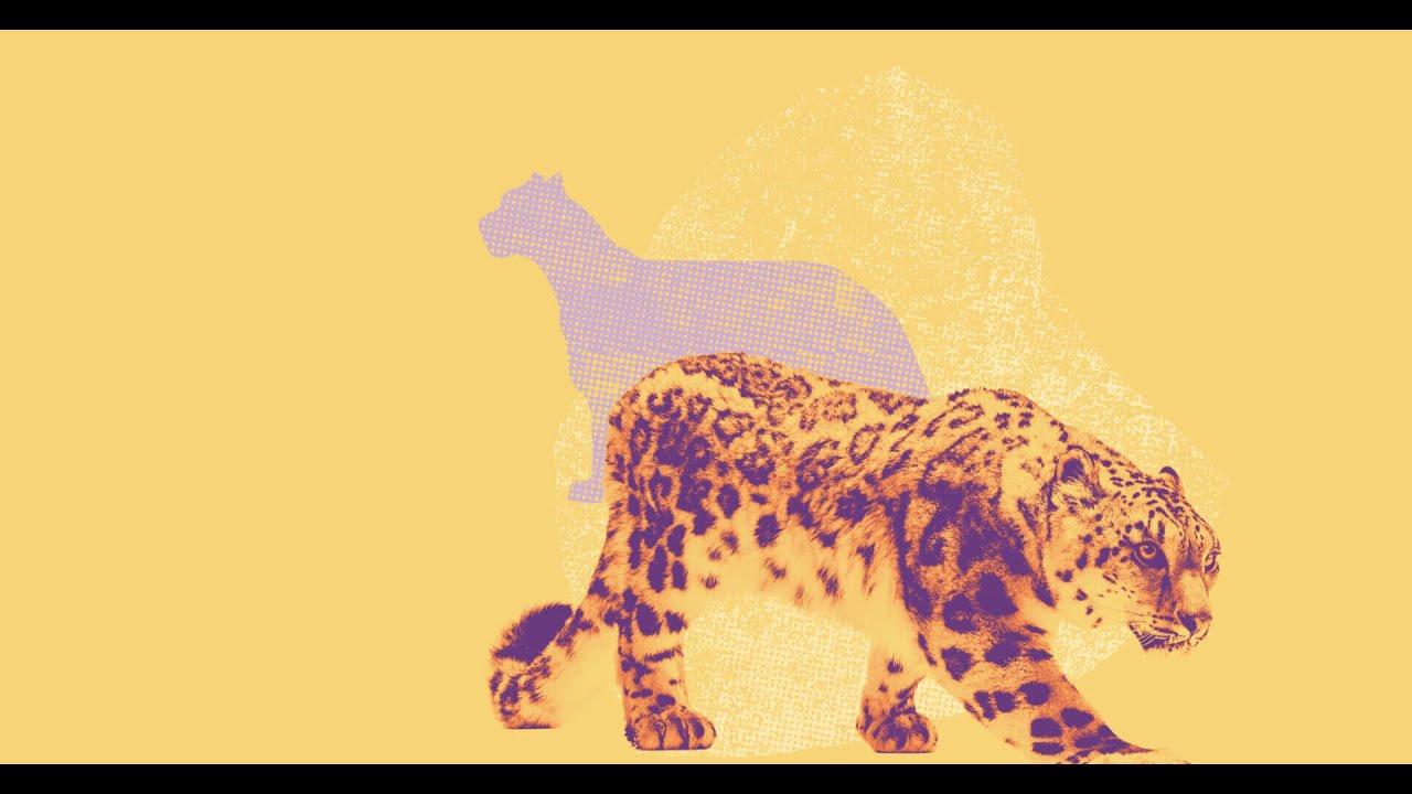 Adotta un Leopardo delle Nevi
