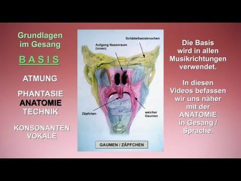 Gesangsunterricht - Anatomie Gesang / Sprache - YouTube