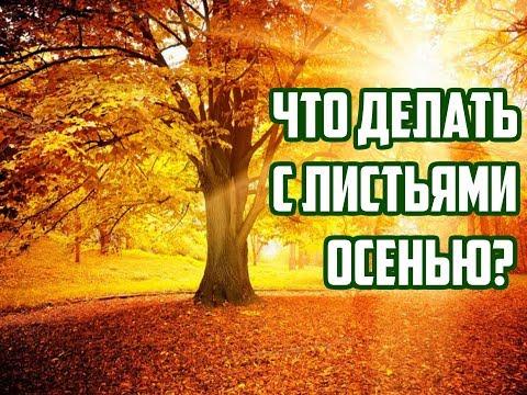 Что делать с опавшими листьями осенью / Компостная куча / Как повысить плодородие почвы