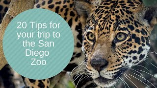 TIPS & TRICKS: The World Famous San Diego Zoo