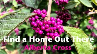 Alberta Cross - Find a Home Out There (HD)