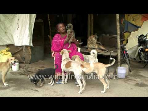 An Indian lady treats stray dogs as her children