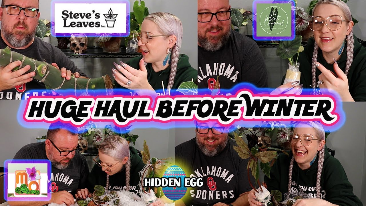 Huge Houseplant Haul & Unboxing from Steve's Leaves, Mt Orchids & The Planty Place