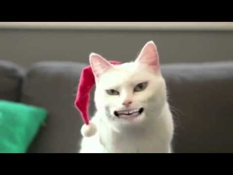 comedy central funny cat videos