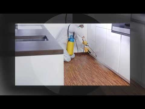 Bed Bug Exterminator Hawaii 4692000637 Bullseyek9 Com Youtube