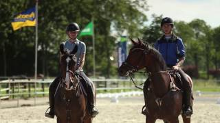 Wellant mbo - Paardensport & -houderij