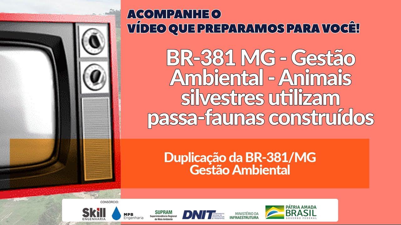 BR-381 MG - Gestão Ambiental - Animais silvestres utilizam passa-faunas construídos