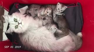 0. Günden-2 aya -4 yavru kedinin büyümesi
