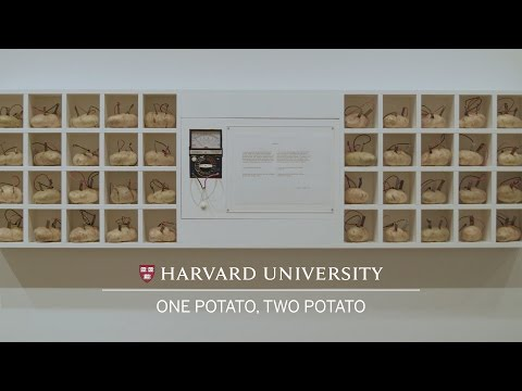 One potato, two potato: Contemporary work at Harvard Art Museums